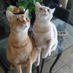 Bengle & Simba