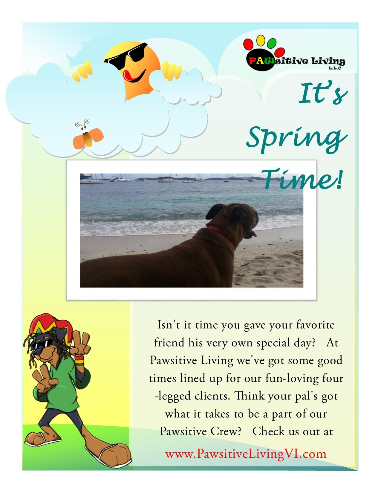 pawsitive news pawsitive living llc doggy field trip saint thomas pet sitting virgin islands